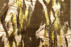Бенгалин Shadow