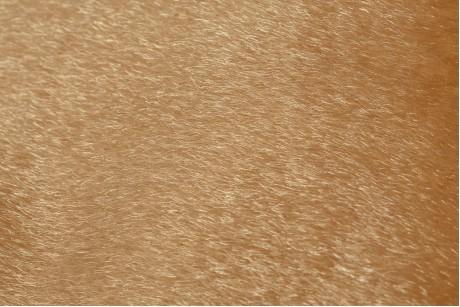 Искусственный мех нерпа (Muddy Waters)